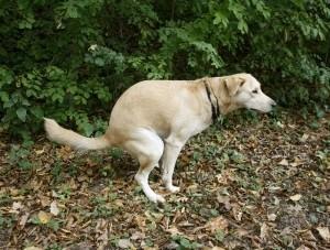 poop away my dog friend