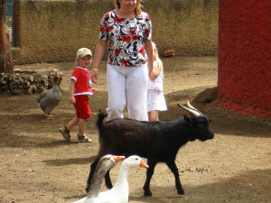 white pants and a petting zoo